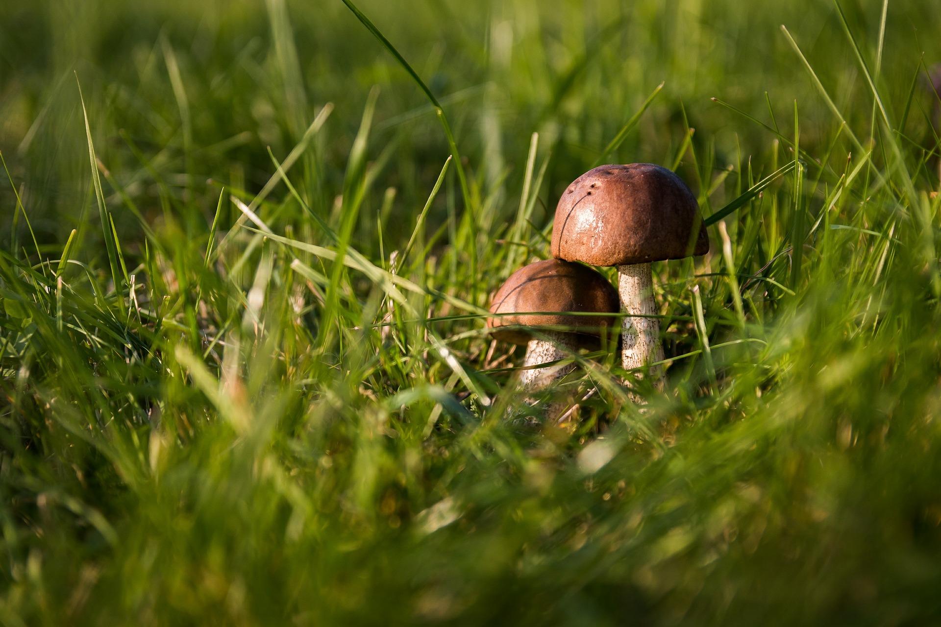 Apprenez à connaitre la nature proche de chez vous !