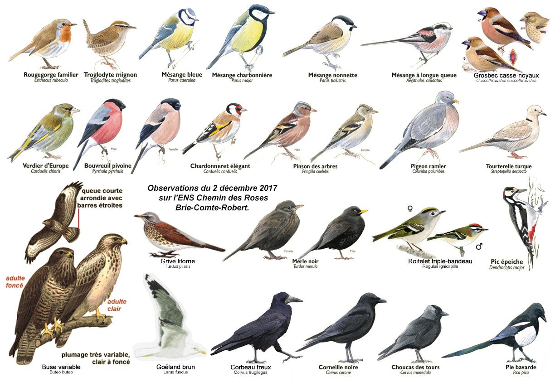Oiseauxens