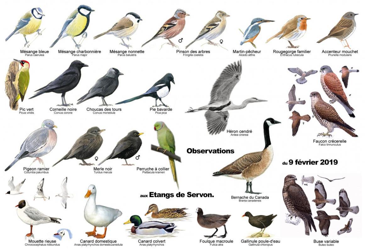 Oiseauxservon
